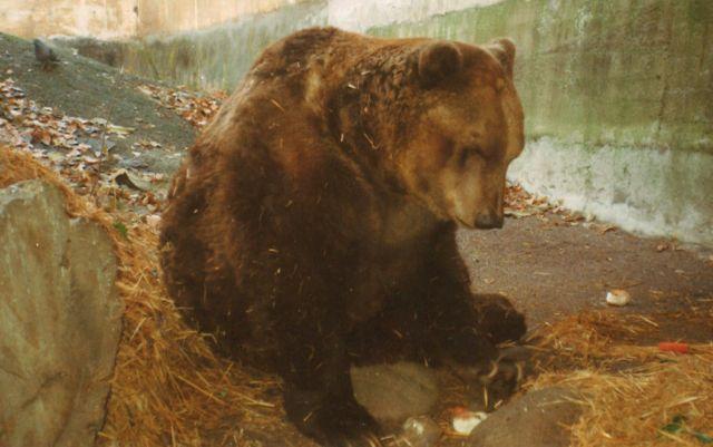 Masha e orso non un cartone animato ma due esseri speciali che