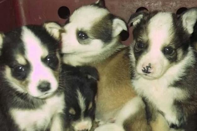 Cuccioli Fratellini E Piccoli Solitari Che Non Hanno Ancora Nessuno