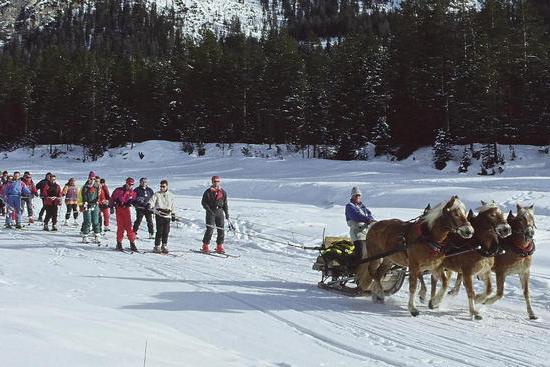 Armentarola cavalli per trainare gli sciatori stanchi for Cavalli bolzano