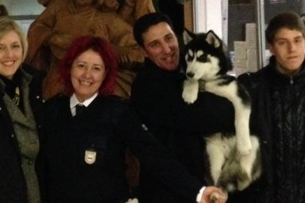 I Vigili Urbani Salvano Un Husky Fuggito Da Casa Bolzano Alto Adige